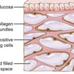 "Interstitium the newly discovered ""organ"" can explain some misunderstood issues!"